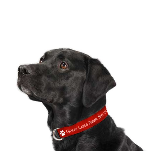 Man's Best Friend Pet Collar
