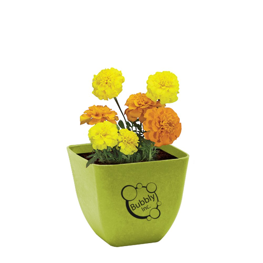 Let it Grow Flower Kit
